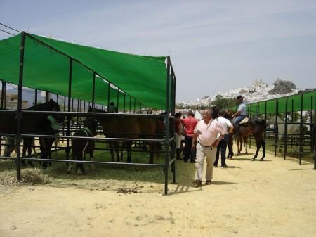 Primera jornada de la Feria de Ganado de Olvera.