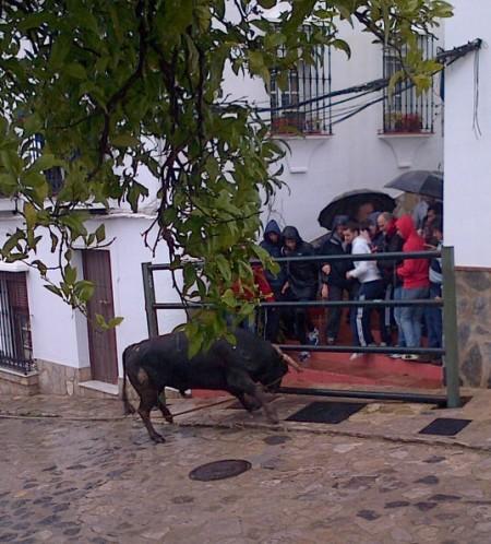 Un toro, ante un grupo de personas, en el festejo del Domingo de Resurrección en Benamahoma.