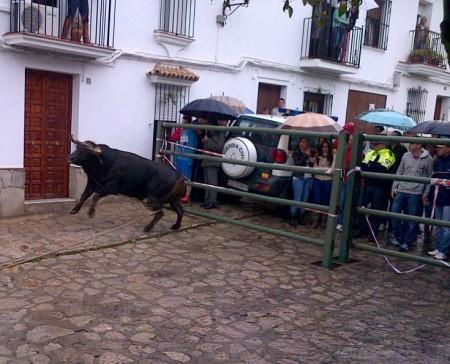 Suelta de toro del Domingo de Resurrección de Benamahoma.
