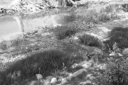 Río Guadalete a su paso por Arcos.