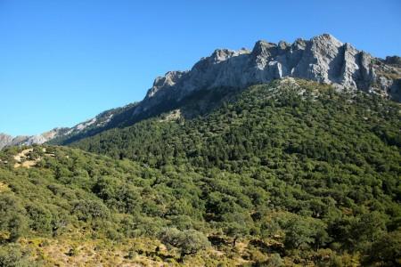 Pinsapar del parque natural Sierra de Grazalema.
