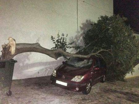 Árbol caído sobre un vehículo en Grazalema.