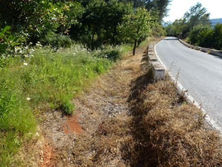Efecto del glifosato sobre la vegetación, con el aumento del riesgo de incendios al secarse antes la hierba y las ramas de los arbustos. Carretetra El Bosque-Benamahoma.