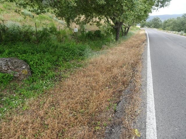 Zona fumigada en la carretera El Bosque-Grazalema.