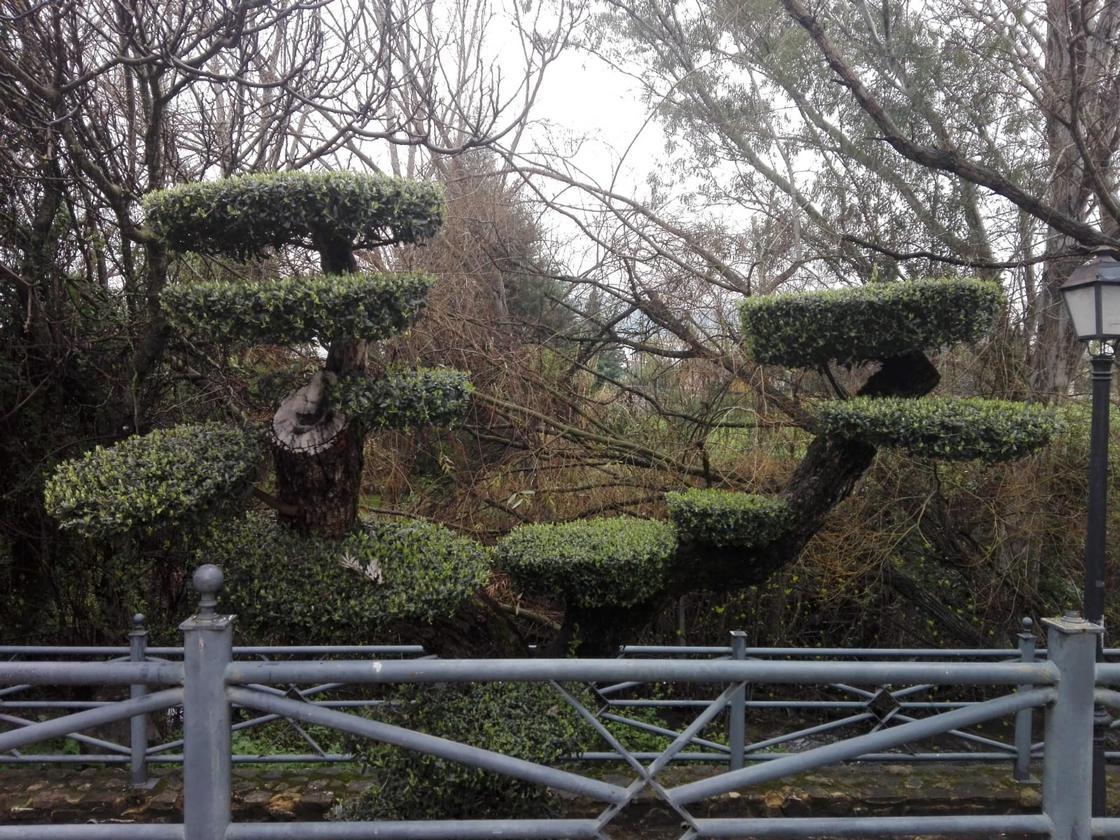 Vegetación esculpida.
