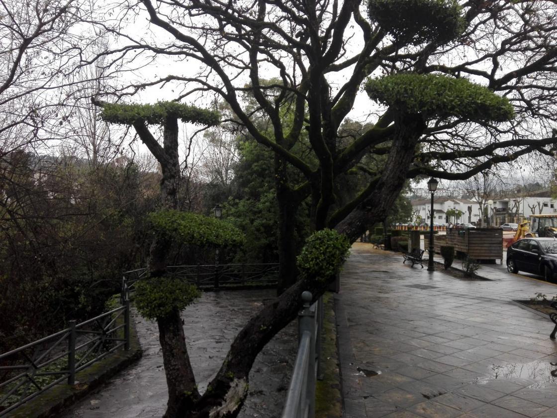 Un paseo urbano por el río El Bosque